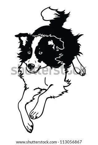 Running Dog Border Collieblack White Vector Stock Vector