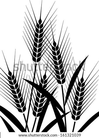Field Wheat Barley Rye Vector Visual Stock Vector