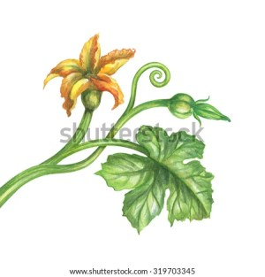 Watercolor Pumpkin Stock Images, RoyaltyFree Images