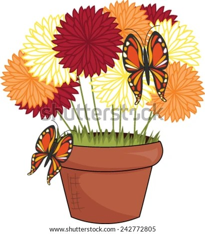 potted mums stock royalty-free