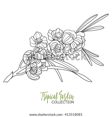 Orchid-line-drawing Stock Photos, Royalty-Free Images