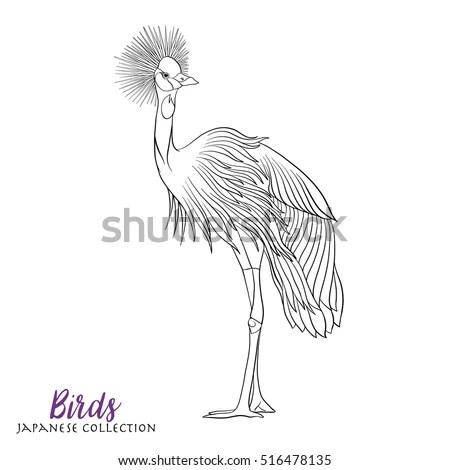 Tropical Bird Royal Flycatcher Hand Draw Stock Vector