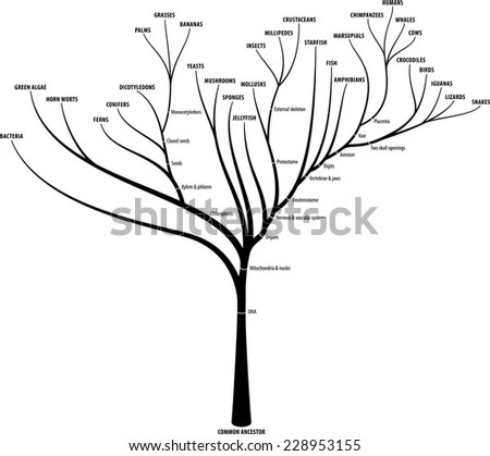 Speciation Stock Images, Royalty-Free Images & Vectors