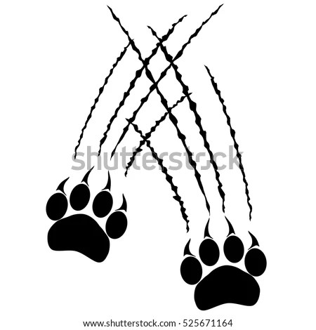 Footprints Big Cat Paws Panther Tiger Stock Vector