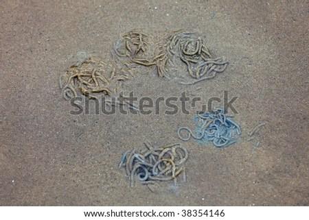 sandworm stock