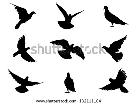 9 Realistic Silhouettes Pigeons Flying Standing Stock