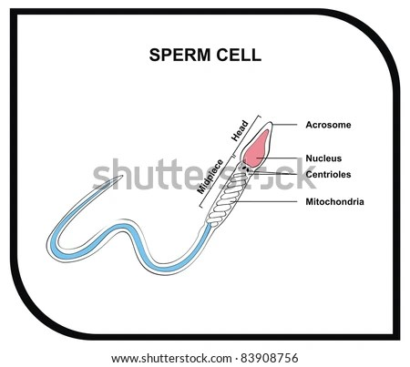 Cell Membrane Stock Images, Royalty-Free Images & Vectors