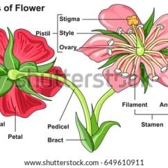 Lotus In Water Plant Diagram Word Problems Involving Venn Leaning Parts Flower Kids Worksheet Stock Vector 242761930 - Shutterstock