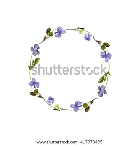 blooming purple alyssum flowers