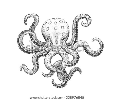 Simple Octopus Diagram, Simple, Free Engine Image For User