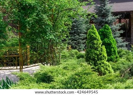 shrub stock royalty-free