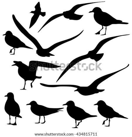 Gull Stock Photos, Royalty-Free Images & Vectors