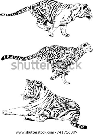 Predator Stock Images, Royalty-Free Images & Vectors