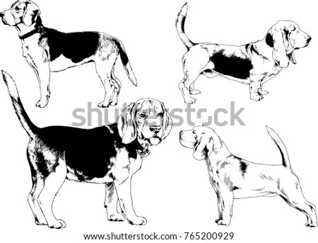 Pedigree Stock Images, Royalty-Free Images & Vectors
