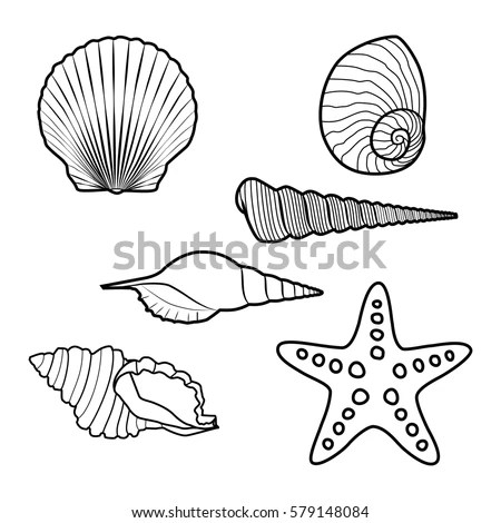 Beach Shells Art
