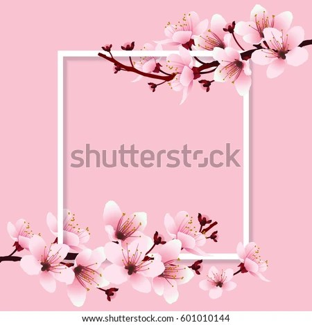Cute Baby Sorry Hd Wallpaper Cherry Blossom Sakura Branch Pink Flowers Stock Vector