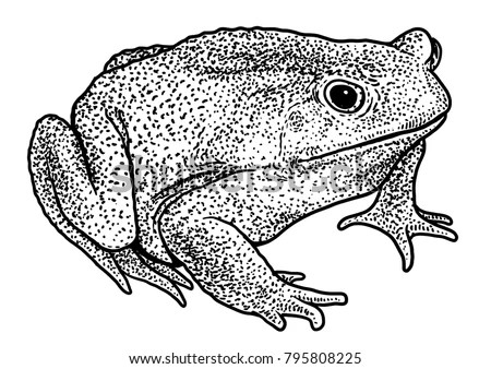 Cane Frog Stock Images, Royalty-Free Images & Vectors