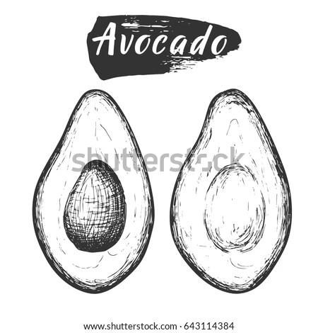 Sketch Ink Vintage Avocado Cut Illustration Stock Vector