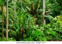 Tropical Garden Cairns Queensland Australia Stock Photo