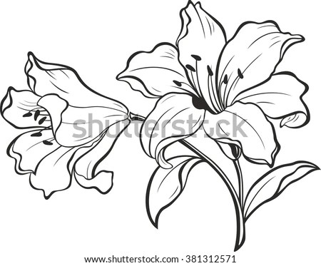 Lily Stock Images, Royalty-Free Images & Vectors