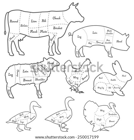 Meat Diagram Stock Images, Royalty-Free Images & Vectors