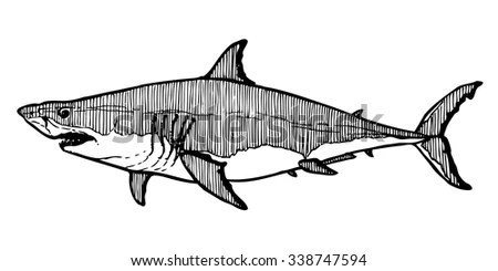 White Shark Decorative Ink Drawing Vector 스톡 벡터 338747594