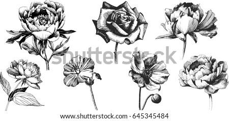 Wild Flowers Peony Roses Anemone Isolated Stock Vector