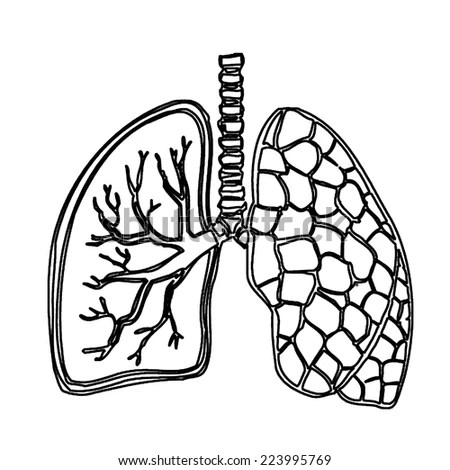Lungs Doodle Drawing Medical Background Excellent Stock