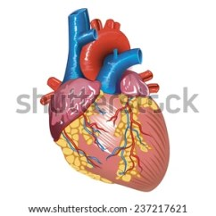 Vintage Red Real Heart Diagram Trail Tech Striker Wiring Muscle Stock Photos, Images, & Pictures | Shutterstock