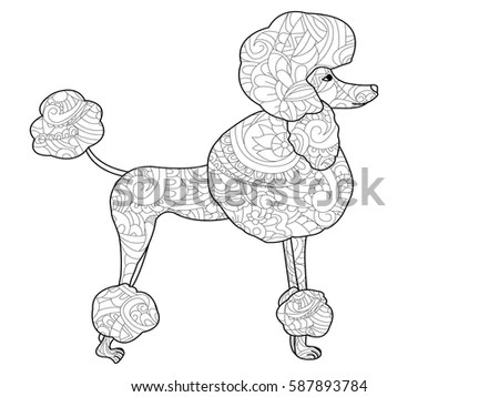 Poodle Dog Coloring Book Adults Vector Stock Vector