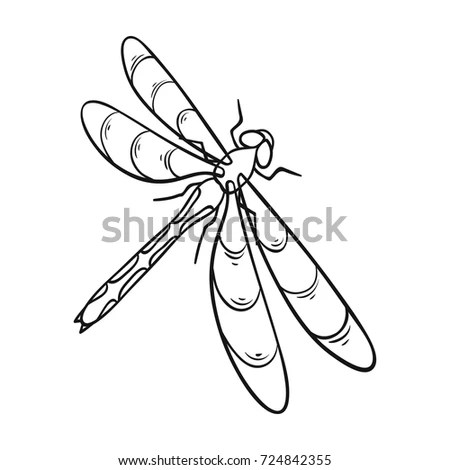 Invertebrate Stock Images, Royalty-Free Images & Vectors