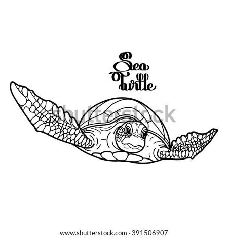Graphic Hawksbill Sea Turtle Drawn Line Stock Vector
