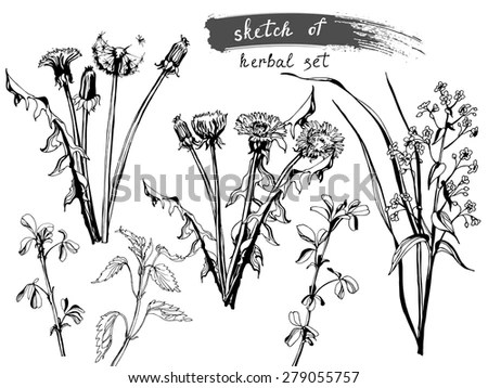 Sketch Wild Field Flowers Grass Collection Stock Vector