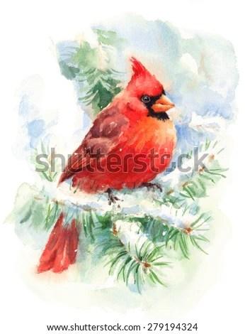 Watercolor Bird Cardinal Winter Christmas Hand Stock