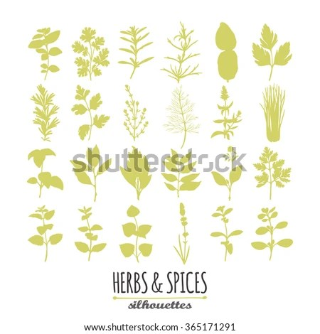 Savory Herb Stock Images RoyaltyFree Images Vectors