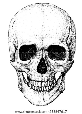 Hand Drawn Anatomy Skull Different Tones Stock Vector