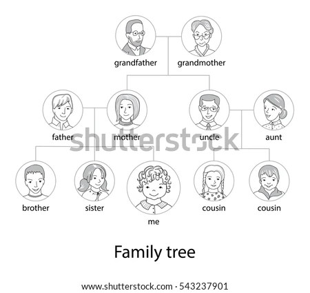 Genealogical Stock Images, Royalty-Free Images & Vectors