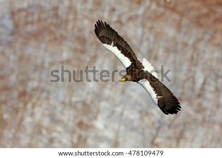 Sea Eagle Stock Images Royalty Free Images Amp Vectors
