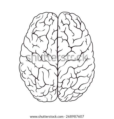 Sketch Brain Vector Illustration Stock Vector 268987607