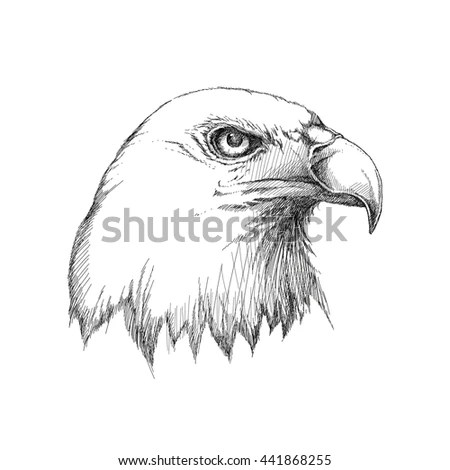 Eagle Sketch Stock Images, Royalty-Free Images & Vectors