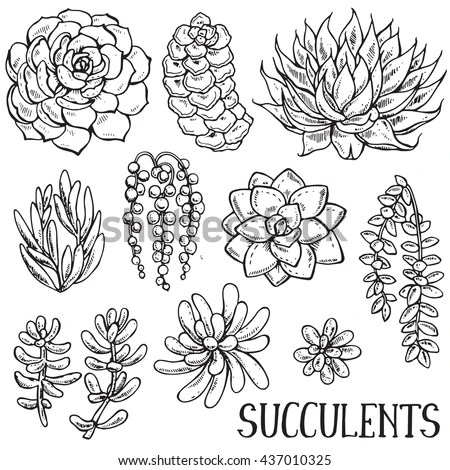 Succulent Stock Images, Royalty-Free Images & Vectors