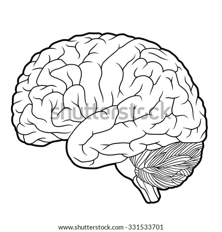 Brain Outline Stock Images, Royalty-Free Images & Vectors