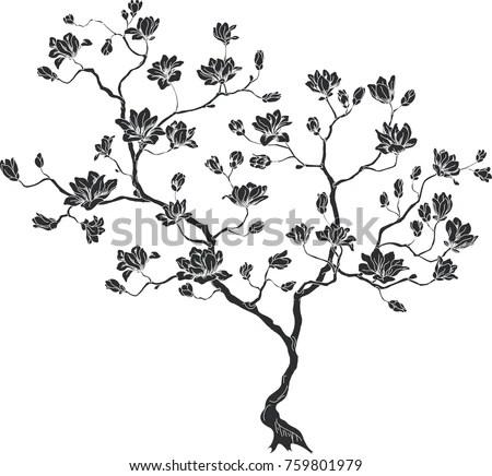 Cherry Blossom In Spanish