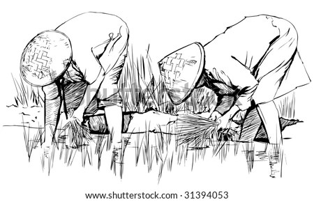 Farmers Are Planting Rice Stock Images, Royalty-Free