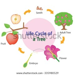 Strawberry Fruit Diagram Interior Brain Plant Growth Cycle Stock Photos, Royalty-free Images & Vectors - Shutterstock