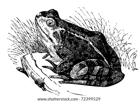 White Frog Stock Images, Royalty-Free Images & Vectors
