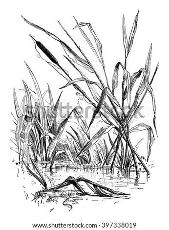 Summer Riverbank Landscape Ink Drawing Stock Illustration