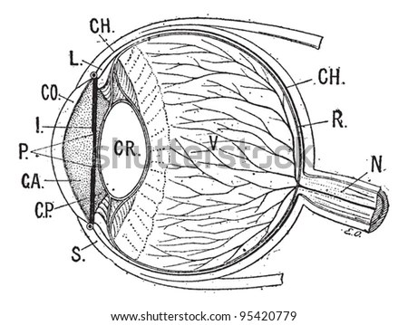 Anterior Chamber Stock Images, Royalty-Free Images