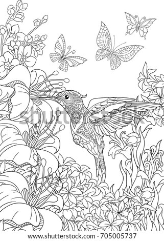 Coloring Page Hummingbird Butterflies Hibiscus Flowers