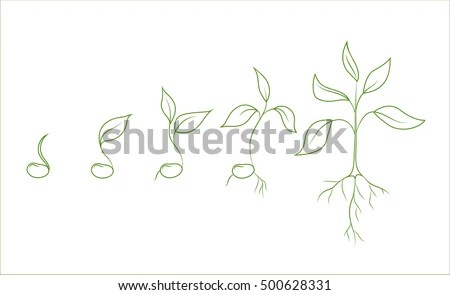 Cotyledon Stock Photos, Royalty-Free Images & Vectors